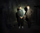 inSYNC's 'Needed' Track of the Week: 'Tslamp' by MGMT